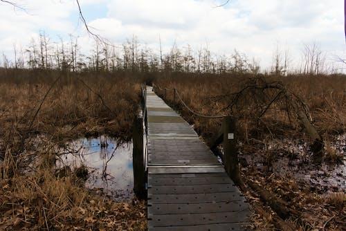 Ingyenes stockfotó erdő, híd, híd a természetben, víz témában