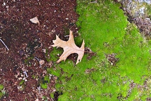 Gratis stockfoto met gedroogd blad, herfst, natuur
