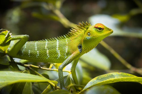 Green and Yellow Lizard on Brown Wood