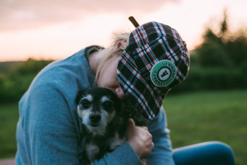 Shallow Focus Photo of Person Kissing a Dog