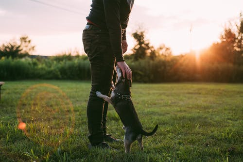 Photo of Person Standing Beside Dog on Grass Field