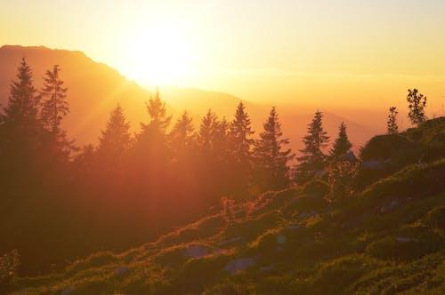 Darmowe zdjęcie z galerii z drzewa, góra, na dworze, natura
