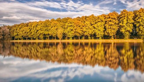 Fotobanka sbezplatnými fotkami na tému denné svetlo, farba, jasný, krajina