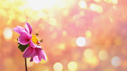 arılar, bitki, bitki örtüsü, böcekler içeren Ücretsiz stok fotoğraf