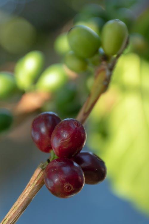 咖啡, 工厂 的 免费素材照片