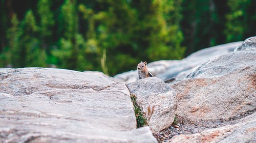 Photo of Squirrel on Rock