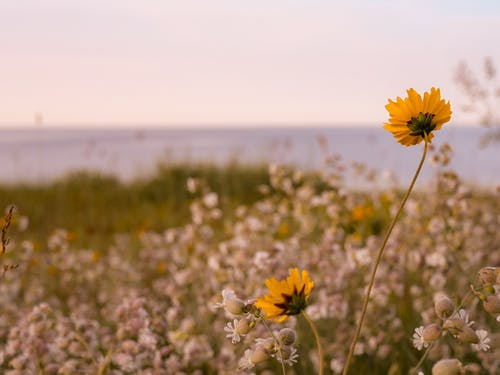 Free stock photo of flower, lake, summer, waterfront
