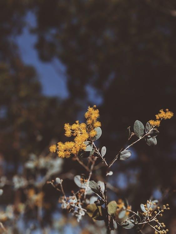denní, flóra, fotografie přírody