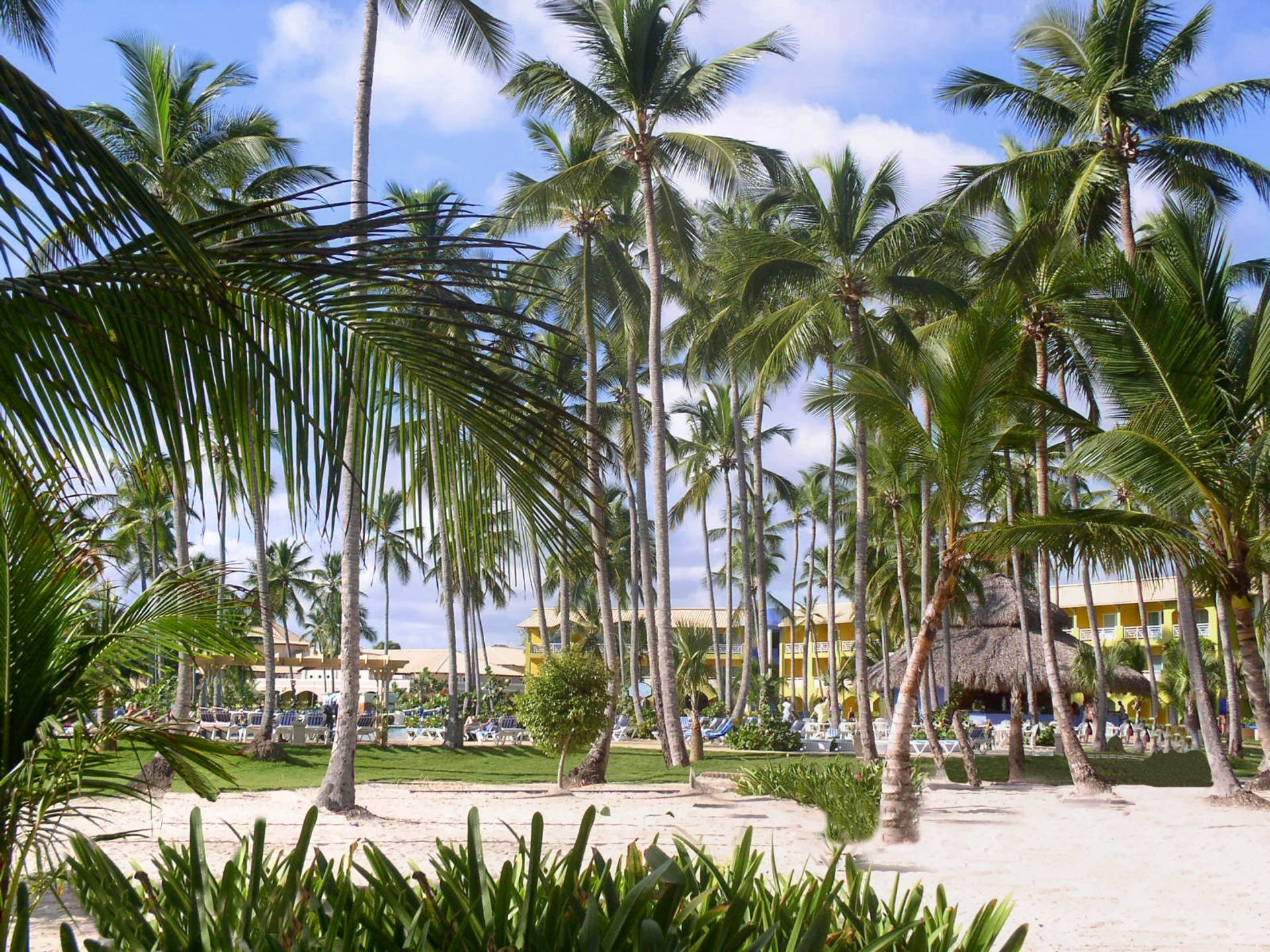 Free stock photo of holiday, warm, caribbean, palm trees