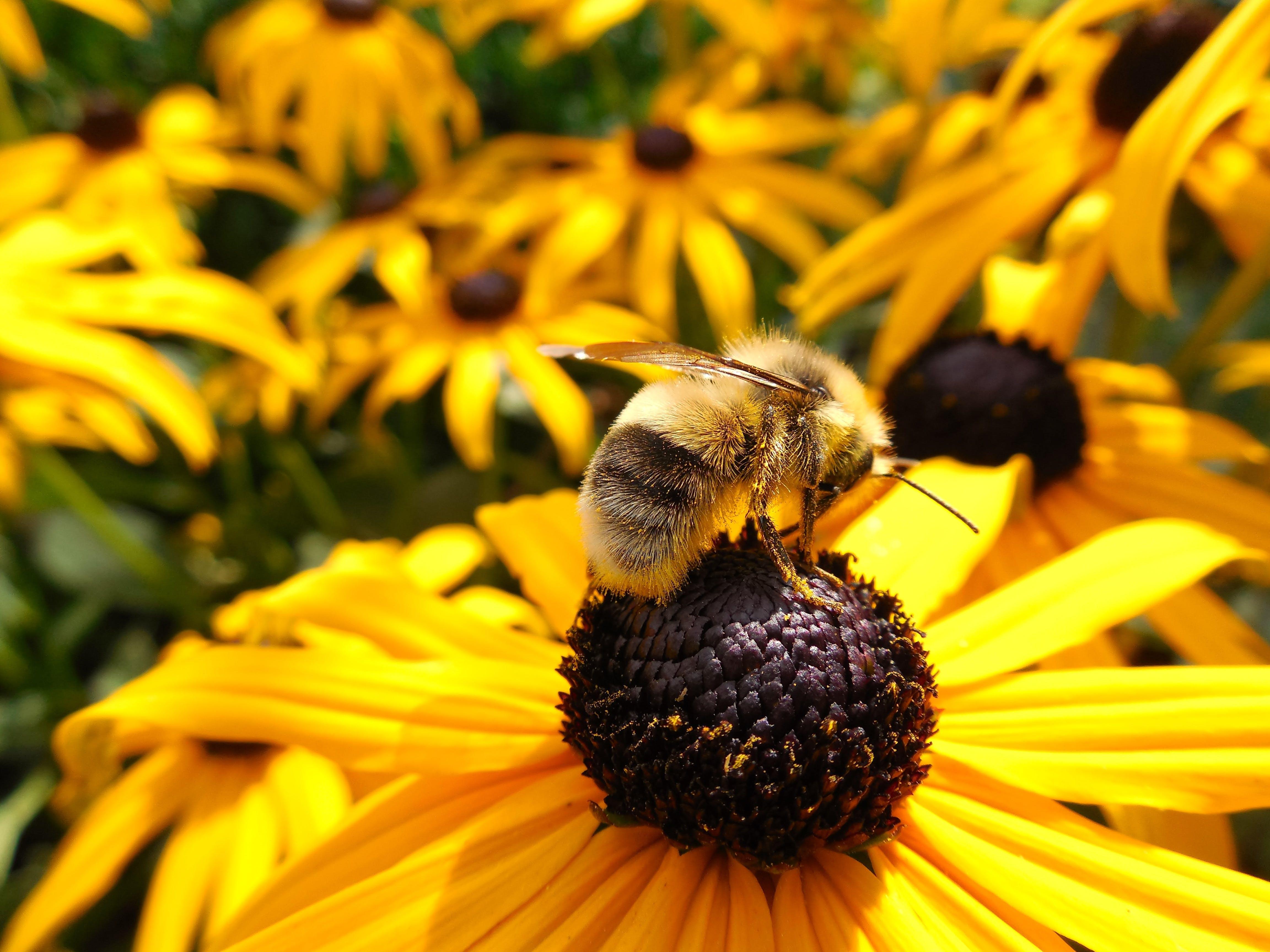 Macro Photography of Bumblebee on Flower