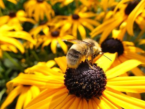 Free stock photo of nature, flowers, summer, sun