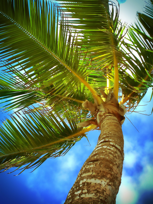 Photos gratuites de arbre, caraïbes, ciel, complexe