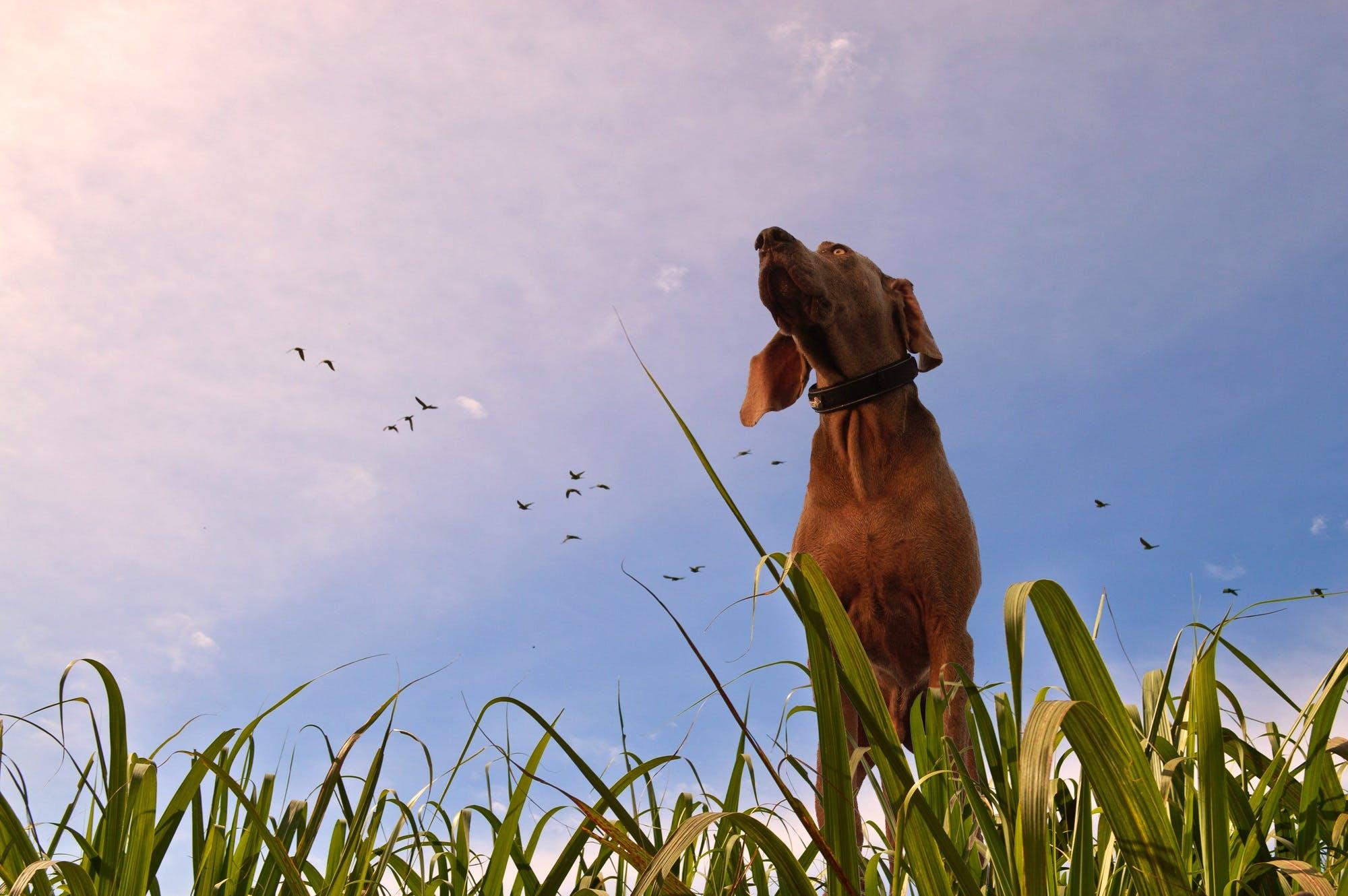 Free stock photo of animal, birds, dog, grass