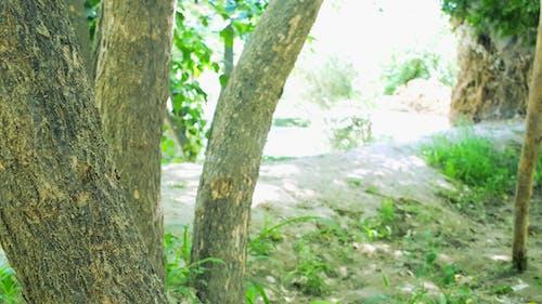 Бесплатное стоковое фото с рафи