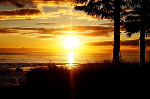 Gratis lagerfoto af appelsin, bagbelyst, fritid, hav