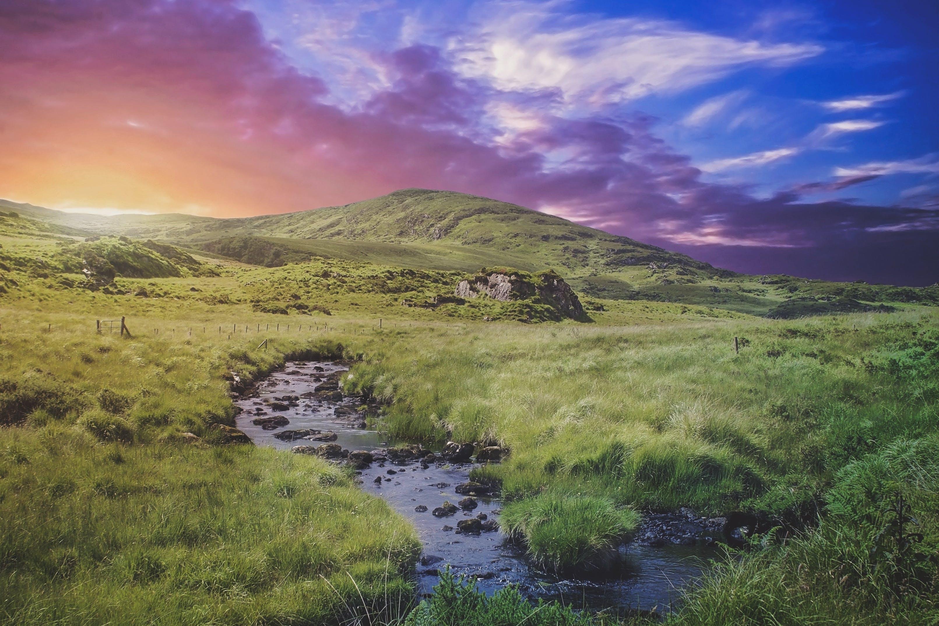 calm, dawn, grass