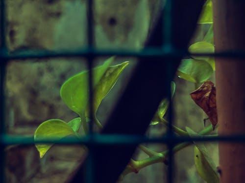 Fotobanka sbezplatnými fotkami na tému okno, rastlina, zelená