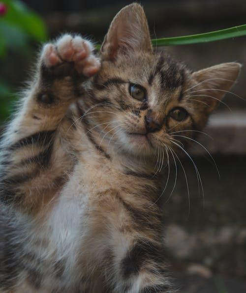 Fotos de stock gratuitas de animal, bote, felino, gato