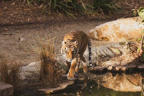 動物, 動物園, 動物攝影, 危險 的 免费素材照片