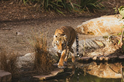 Fotobanka sbezplatnými fotkami na tému cicavec, divé zviera, divočina, divý