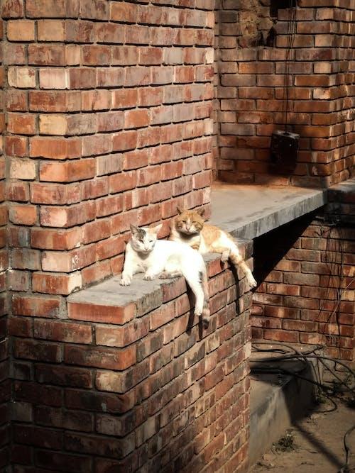 Immagine gratuita di animali carini, gatto, gatto bianco, gatto randagio