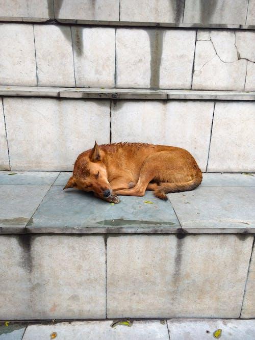 Immagine gratuita di addormentato, adorabile, animale carino, cane