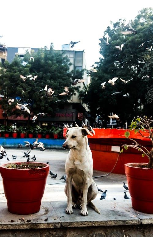 Immagine gratuita di adorabile, animali carini, cane, cane randagio
