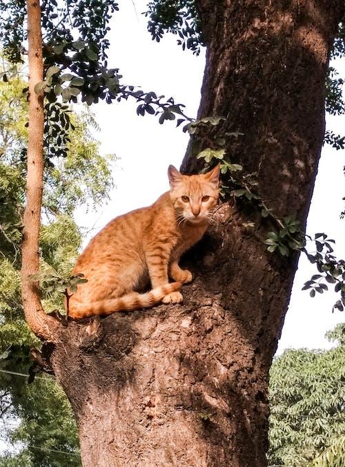 Immagine gratuita di adorabile, albero, gatto, gatto carino