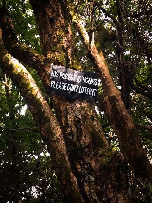 Immagine gratuita di albero, firma, foresta, luce del sole