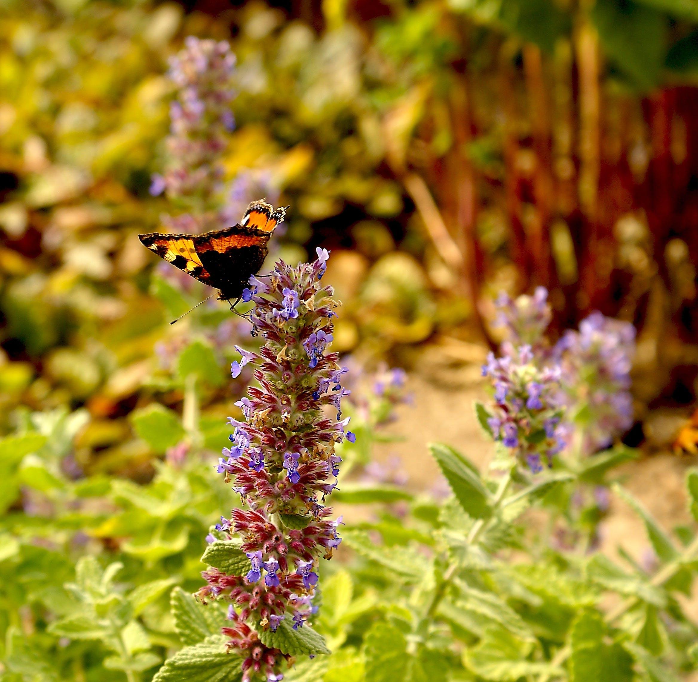 Free stock photo of nature, sunny, summer, garden