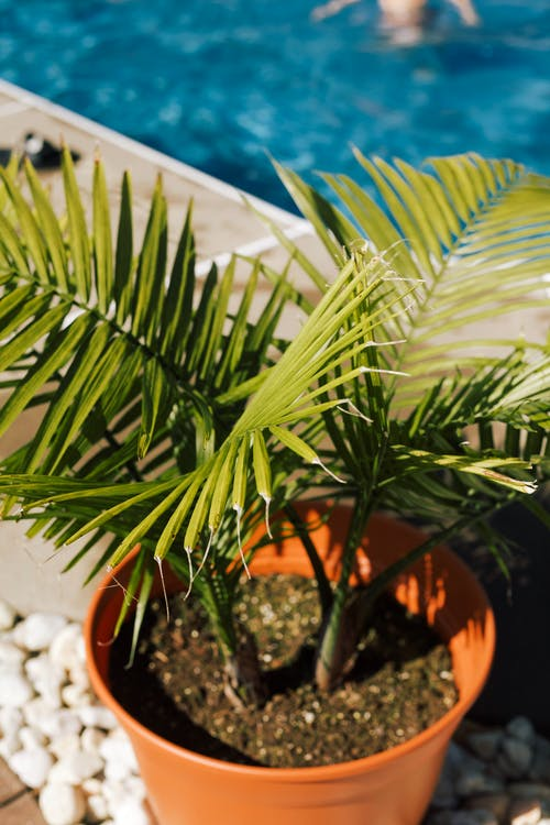 Green Palm Plant on Brown Plastic Pot