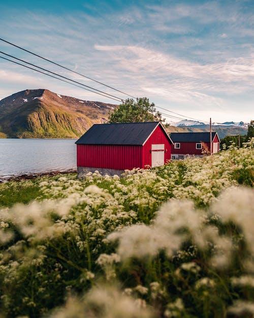 Základová fotografie zdarma na téma budovy, červená stodola, cestování, denní světlo