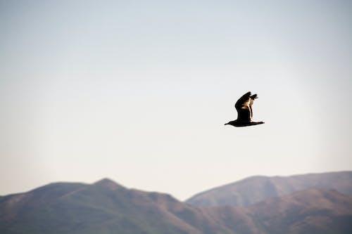 Foto profissional grátis de dağ, gökyüzü, marti
