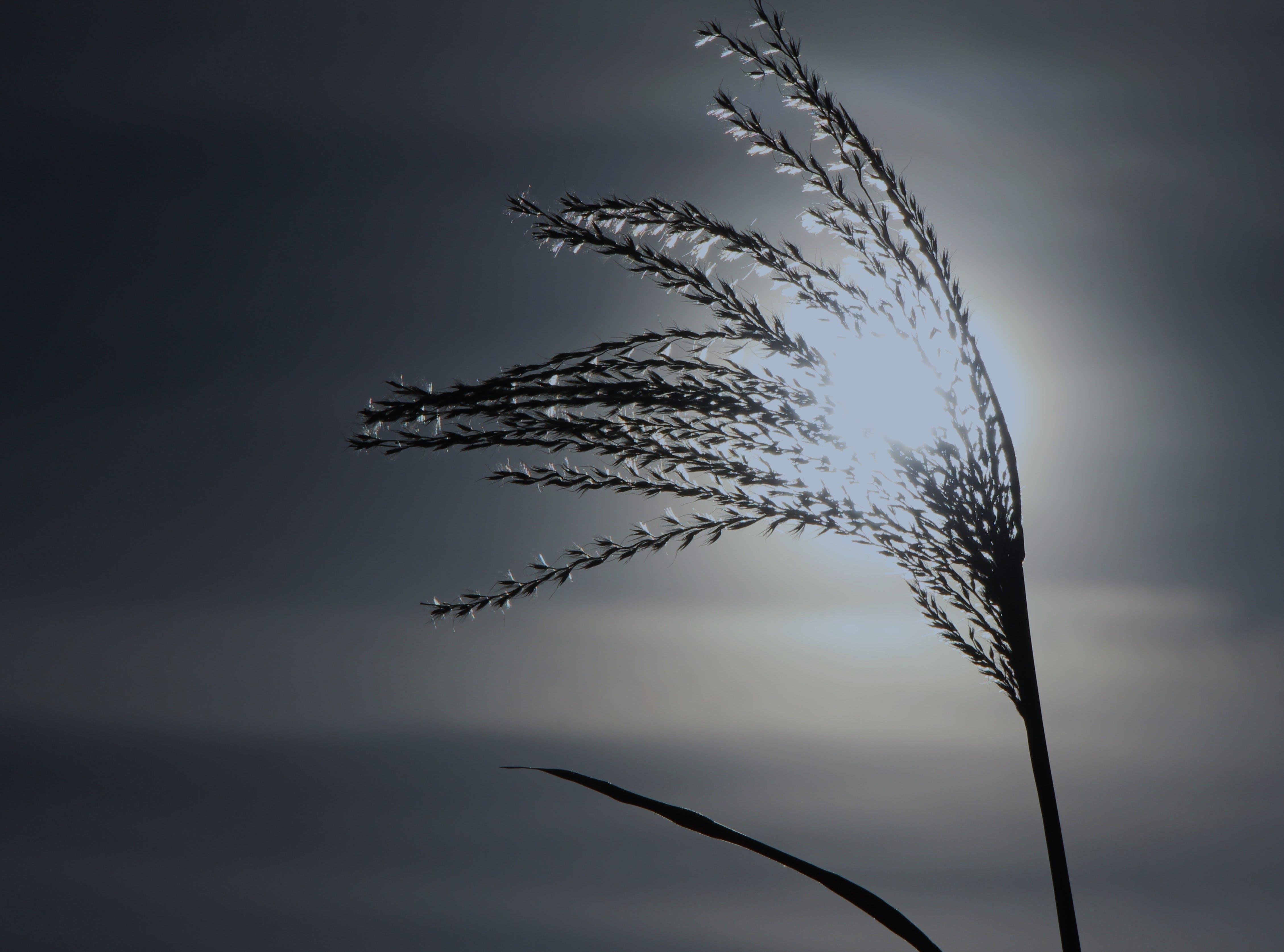 Бесплатное стоковое фото с закат, камыш, легкий, пейзаж