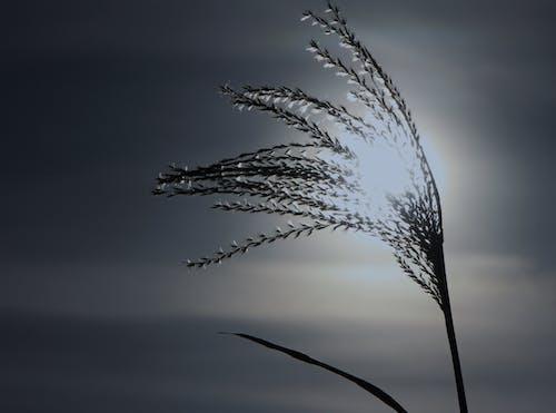 Ilmainen kuvapankkikuva tunnisteilla aamu, auringonlasku, aurinko, kaisla