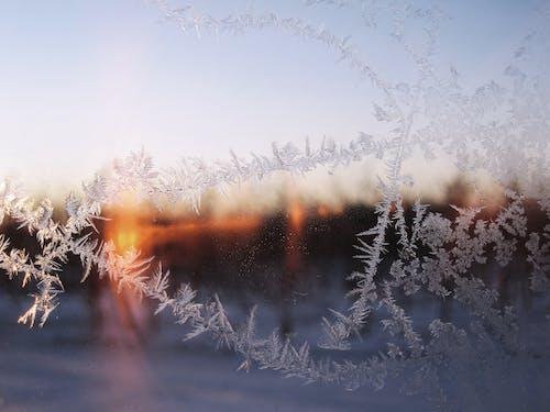 Безкоштовне стокове фото на тему «іній, застуда, зима, лід»