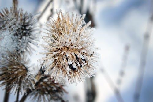 คลังภาพถ่ายฟรี ของ ต้นไม้, น้ำค้างแข็ง, พฤกษา, ฤดูหนาว
