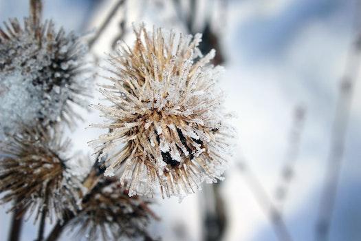 Kostenloses Stock Foto zu schnee, winter, pflanze, blume