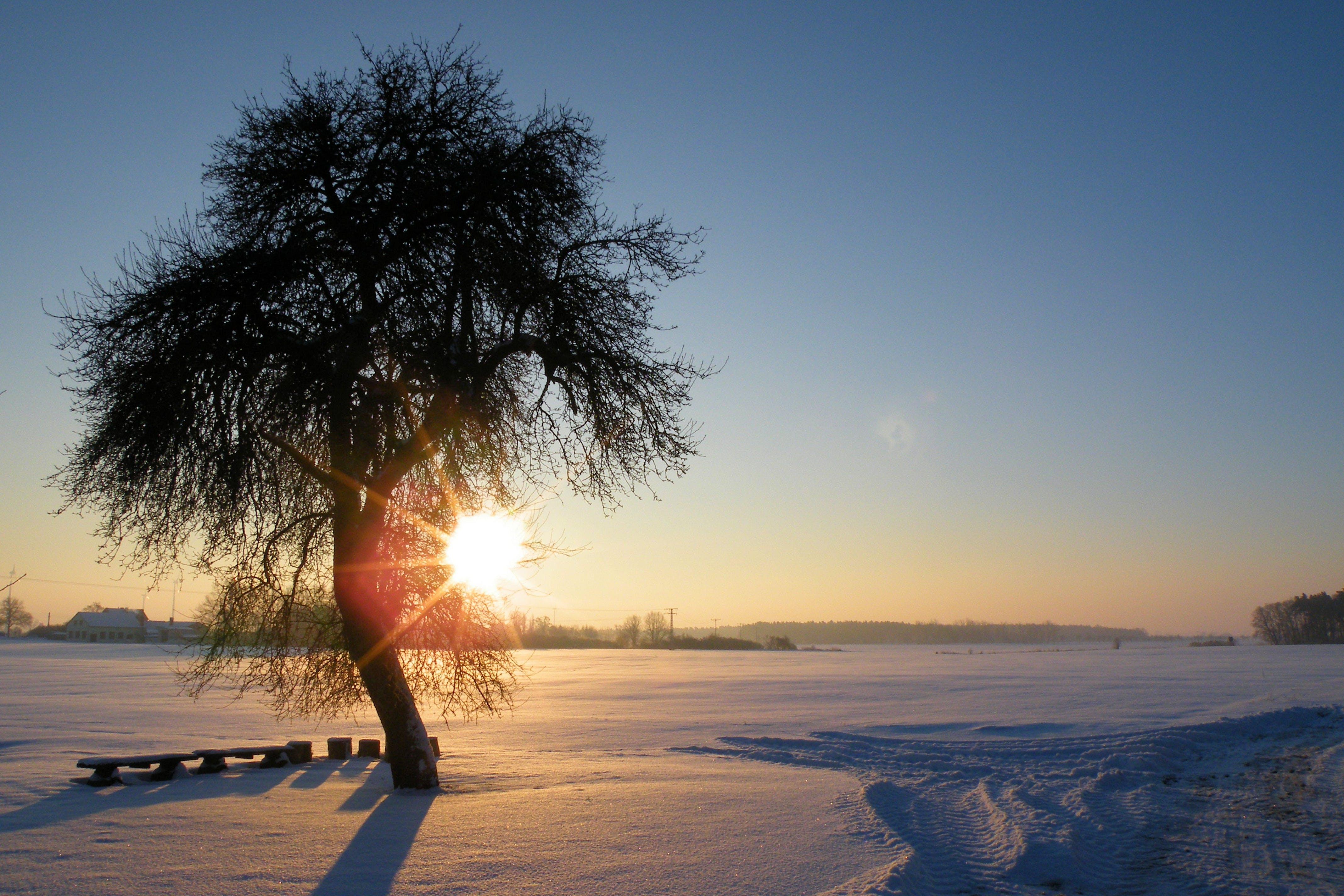 chair, cold, dawn