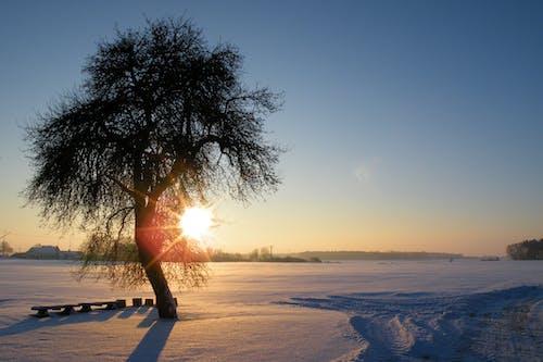 คลังภาพถ่ายฟรี ของ ดวงอาทิตย์, ตอนเย็น, ตะวันลับฟ้า, ท้องฟ้า