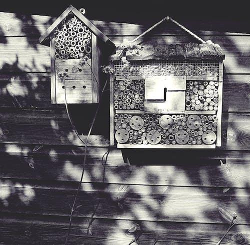 Gratis stockfoto met bijen, bijenhuis, bijenkorf, eenkleurig