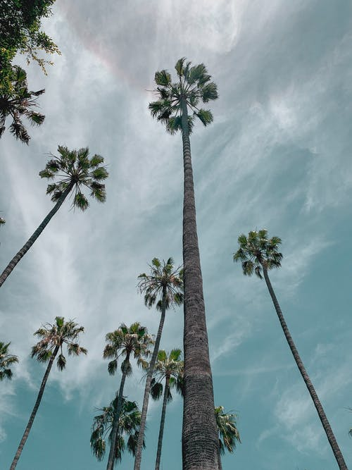 Free stock photo of 90210, beverly, beverly hills, blue