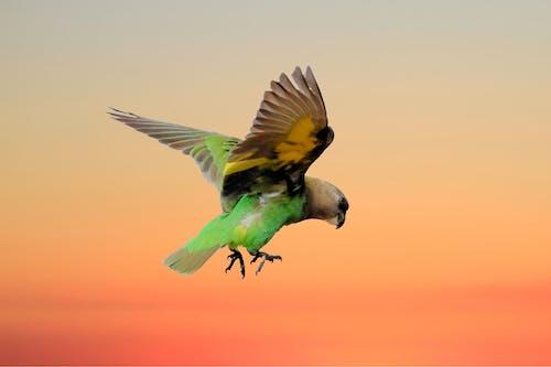 Gratis arkivbilde med fugl, safari, villfugl
