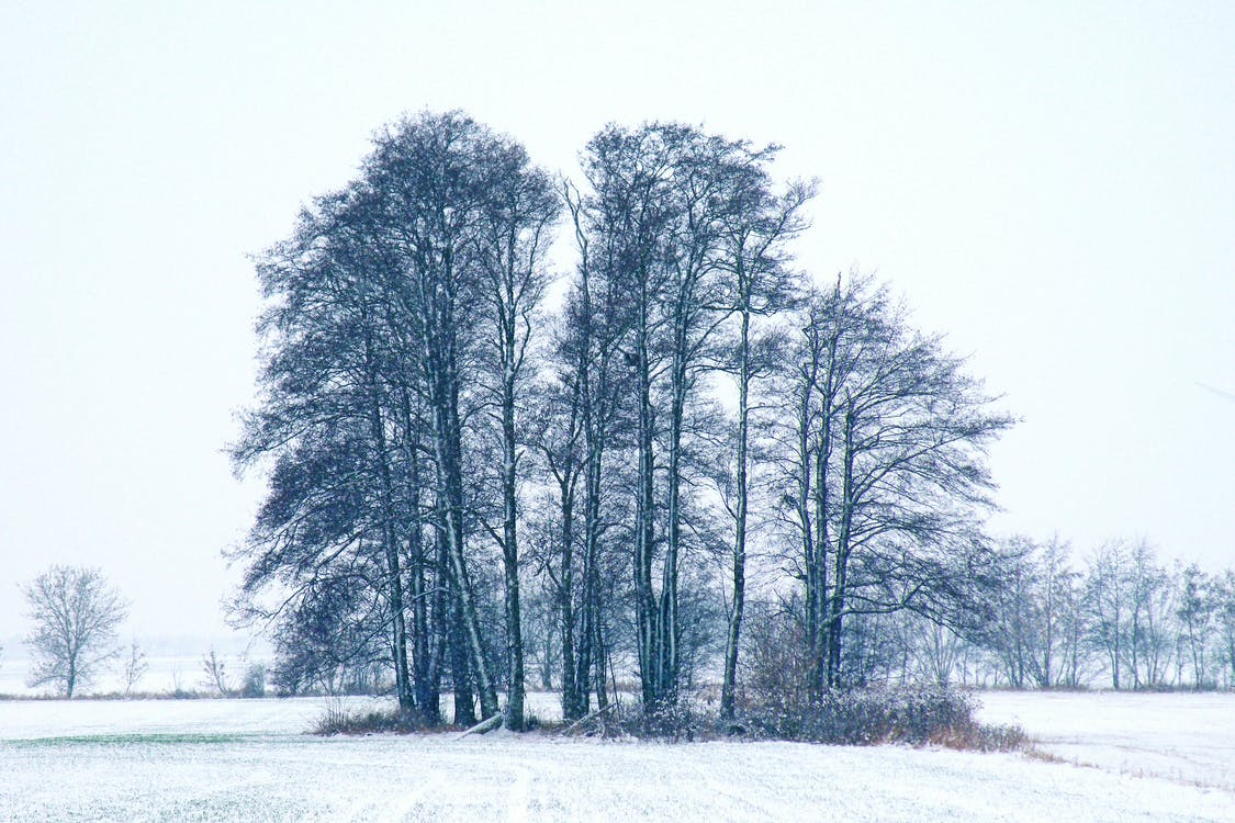 Trees during Winter Season
