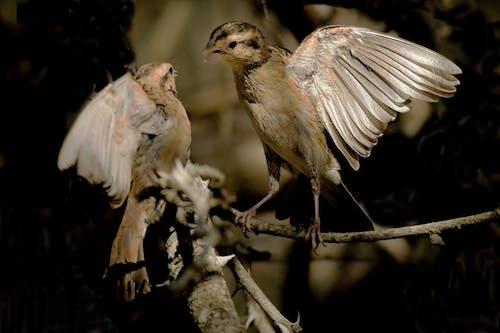 Gratis arkivbilde med fugl, fuglefugl, fugler