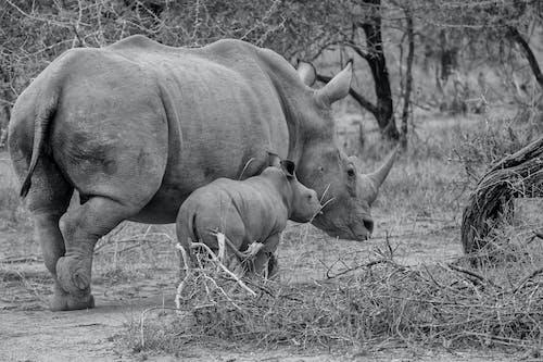 Gratis arkivbilde med safari, vill, villdyr, ville dyr