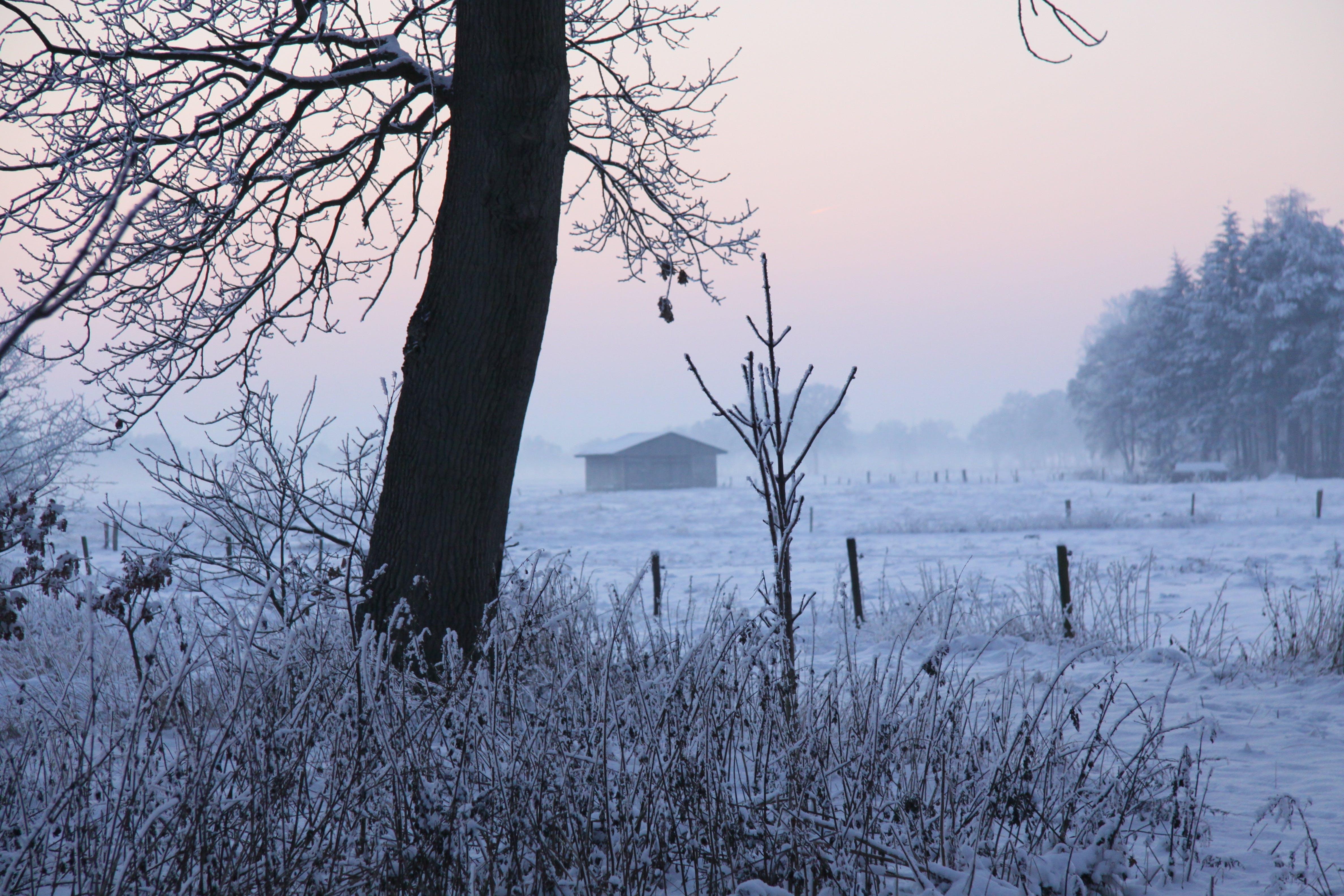 Free stock photo of cold, snow, winter, tree