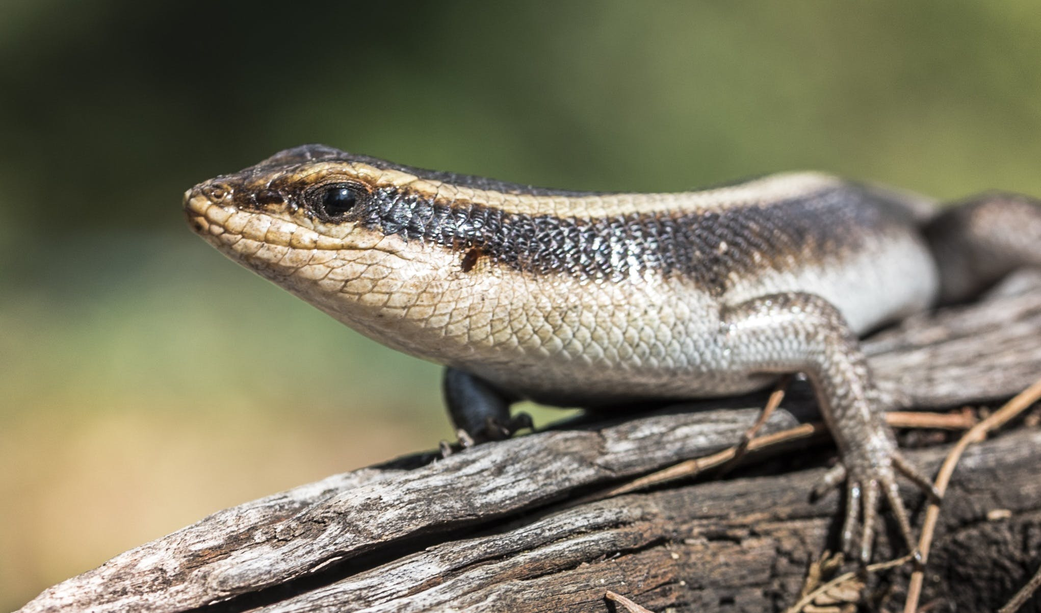 Free stock photo of cold, nature, animal, lizard