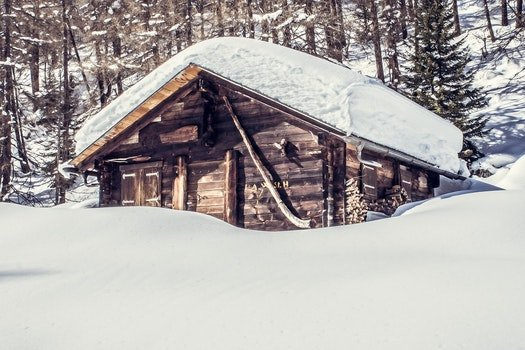 Free stock photo of cold, snow, wood, forest