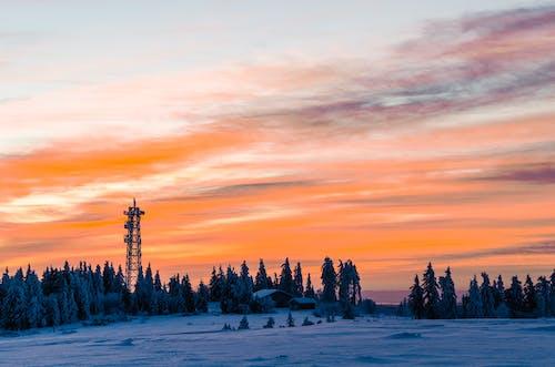 ağaçlar, akşam, buz, doğa içeren Ücretsiz stok fotoğraf
